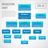 picture of structure  - Organizational chart infographic business structure concept  flowchart vector illustration - JPG