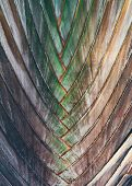 Interwoven pattern in nature - background texture of a palm or tropical plant with alternate leaves