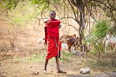 TANZANIA, AFRICA-FEBRUARY 9, 2014: Young Masai herders  herd and protect his goats in savannah on Fe