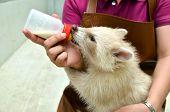 Zookeeper Feeding Baby Albino Raccoon