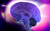 pic of thalamus  - Digital illustration of brain in colour background - JPG
