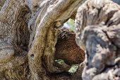 Twisted Tree Trunk