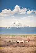 Masai herders  herd  in savannah with a snow covered Mount Kilimanjaro in the background. Tanzania.