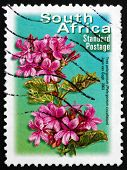 Postage Stamp South Africa 2003 Tree Pelargonium, Flowering Plan