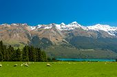 Beautiful landscape of the New Zealand - hills covered by green grass with herds of sheep with might
