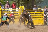 picture of bull-riding  - YONCALLA - JPG