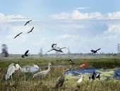 picture of wetland  - Florida Wetlands Collage With Birds And Animals - JPG