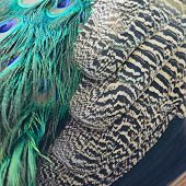 Green Peafowl Feathers