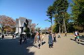 Tokyo - November 22: Visitors Enjoy Cherry Blossom (sakura) On November22, 2013 In Ueno Park, Tokyo.