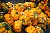 Turban Pumpkins