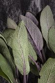 pic of purple sage  - Fresh green and purple sage leaves on black stone background top view close up - JPG