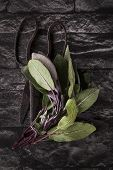 image of purple sage  - Fresh sage leaves and antique old scissors on black textured background - JPG