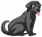 Illustration of a close up black dog