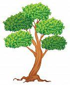 Illustration of a single tree
