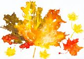 autumn leaves watercolor print on paper. child drawing