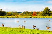 English Landscape In Autumn With Colorful Trees And Wildlife