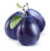 Three Blue Plums Group Isolated On White Background