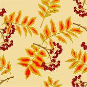 Seamless Texture Rowanberry Vector
