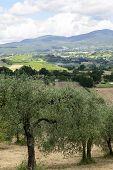 Summer Landscape In Umbria (italy)
