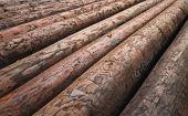 Pole Logs for Construction