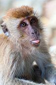 Monkey Portrait With Language
