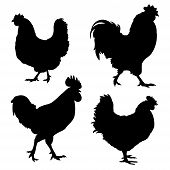 stock photo of rooster  - Silhouettes of chickens and roosters isolated on white - JPG
