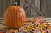 pumpkin on front porch with fall leaves