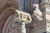 Statue Of The She-wolf Of Siena (italy)