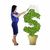 Woman Keep The Money Tree Growth