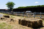 picture of thoroughbred  - a manege of horses with some thoroughbreds - JPG