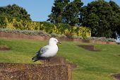 Seagull Perched On Stone Wall