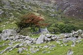 Landscape Of Old Stone Farmhouse And Hawthorn Bush And Stone Wall