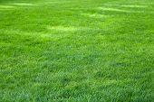 Sunbeams On Grass