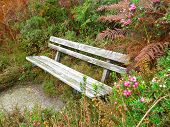 Old Bench with Bushes and Ferns