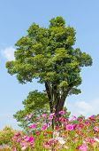 Big Tree On A Background Of The Blue Sky With Tiny Cloud And Flower