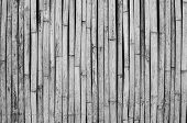 Striped Bamboo Pattern On Row Texture Background