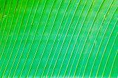 Texture Background Of Backlight Fresh Green Leaf