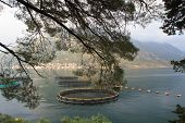 Fish Farm Through Tree Leaves In The Bay Of Kotor.