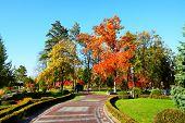 Novi Petrivtsi, Ukraine - October 14: The Trees In Autumn Colors In Mezhigirya On October 14, 2014 I