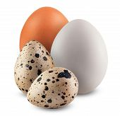 foto of quail egg  - Chicken and quail eggs on white background - JPG
