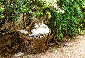 Three Sleepy Cats On Stump