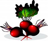 Beet realistic illustration. Vegetables symbol, for use in advertising