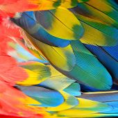 stock photo of feathers  - Beautiful bird feathers Scarlet Macaw feathers pattern background - JPG