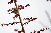 a bird sitting at the edge branch with flowers in a park