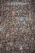 Close up of Bark tree Background