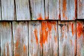 Decayed Timber