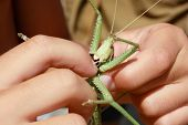insect bites finger