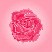 Roses Pink Simple Vector