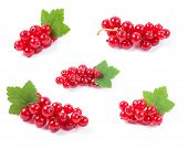 Red Currant Superfood Collection Set. Isolated White Background