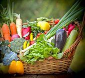 Healthy, fresh organic food
